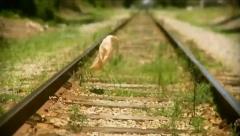 Plastic Bag on train tracks